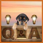 Dog Rescue Greece 05 FAQ