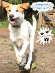 Gastgezin bij Dog Rescue Greece voor Caramel