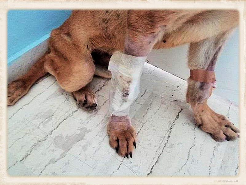 Nieuws - hulp voor reutje Pitty 27 juni 2018